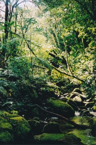 Evergreen montane forest.