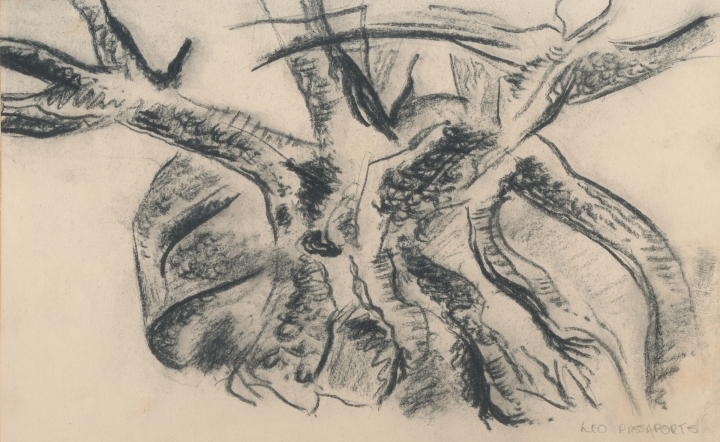 A 'rock-splitter', a variety of fig which I sketched in charcoal.