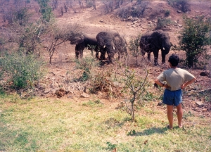 Ray goe out to have a word with the elephants. They agreed not to defecate on the loge walls thereafter.