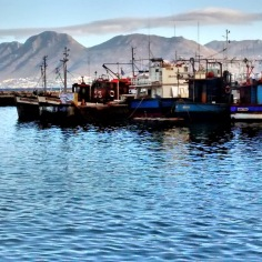 A view of the harbour from the shore. The mountains of the Cape peninsula create the perfect backdrop.